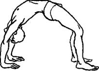 Basic Gymnastic Positions
